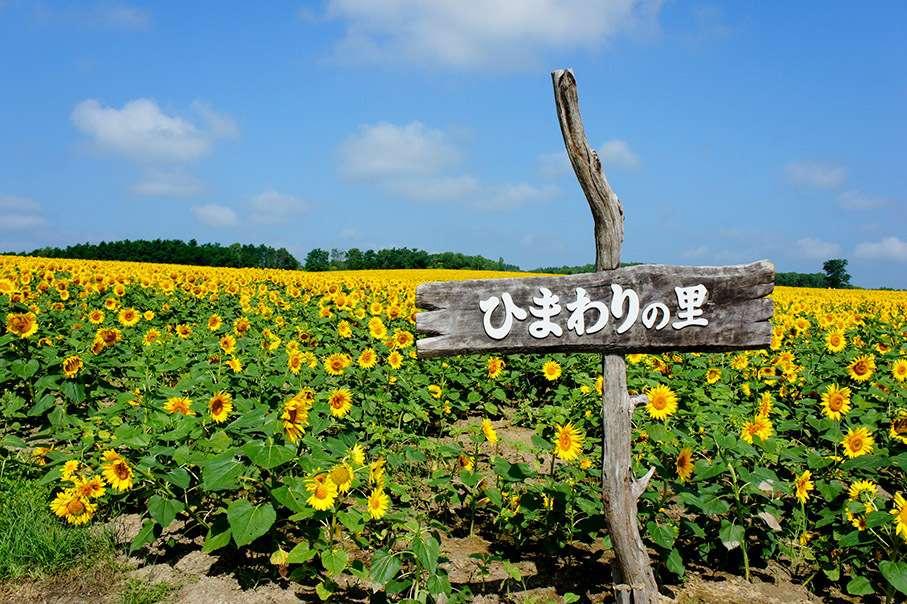 Himawari No Sato