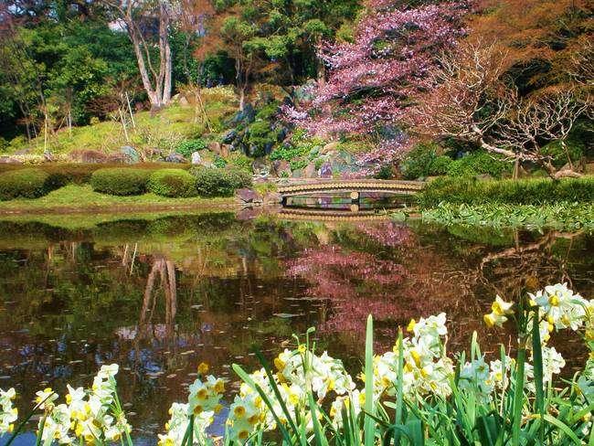 Hasil gambar untuk Kokyo Higashi Gyoen Park