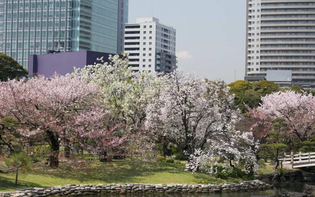 Taman Hamarikyu