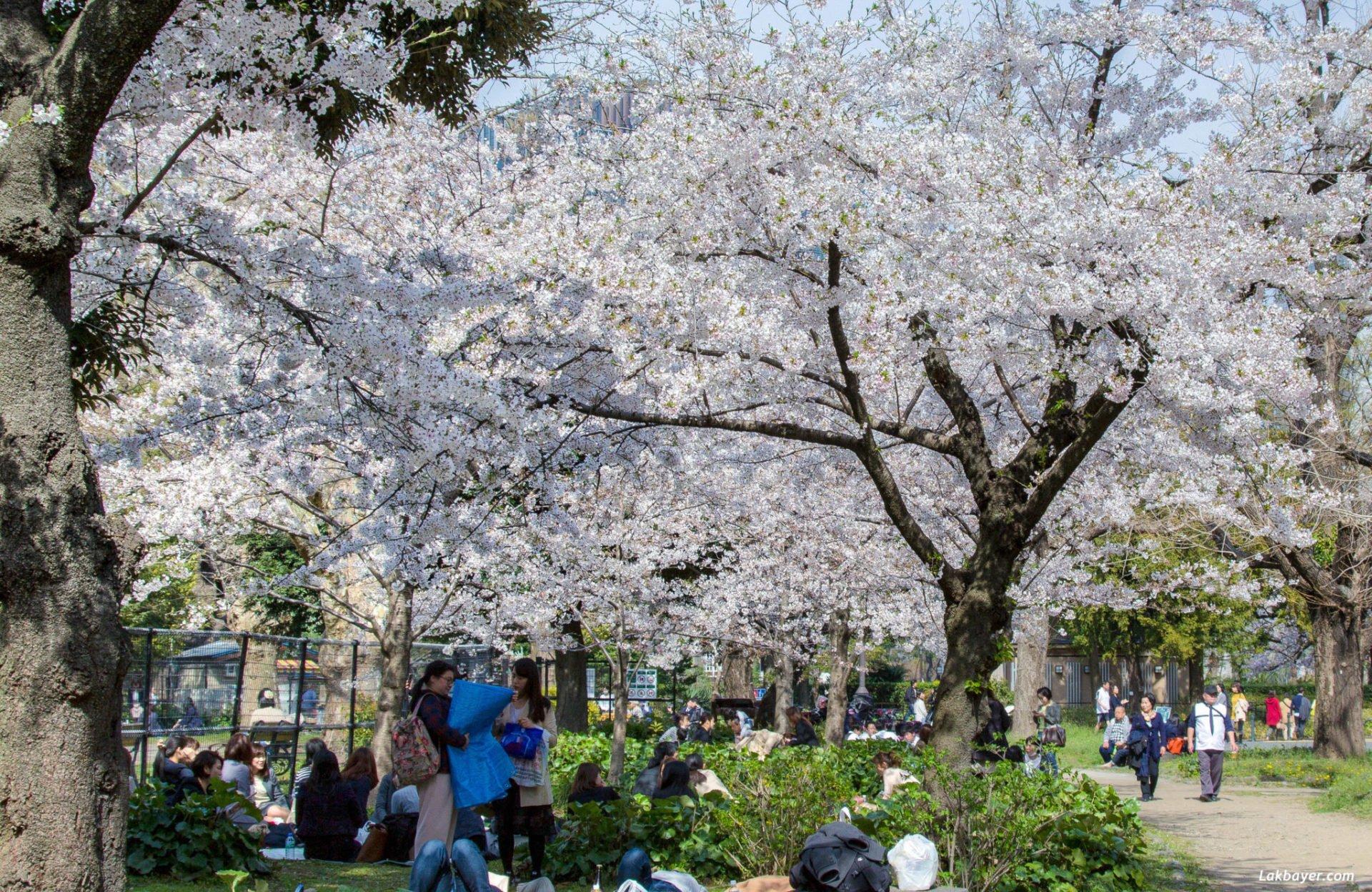 Taman Hibiya