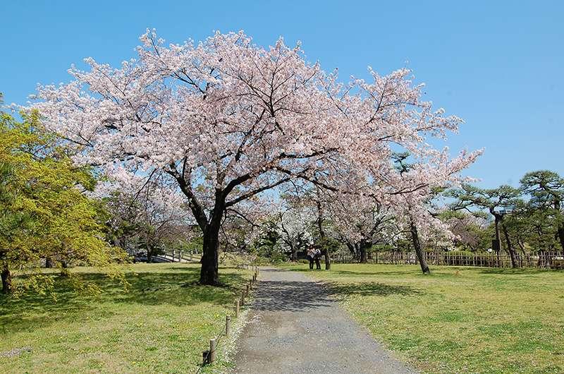 Taman Shiba