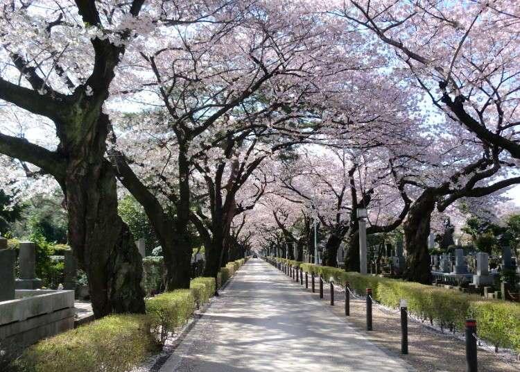 Tempat Pemakaman Umum Aoyama