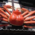 Restoran Kepiting Kani Honke di Jepang