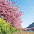 5 Tempat Romantis di Jepang
