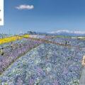 Shinshuu Flower Festa. Festival bunga terbesar di Nagano tahun 2019